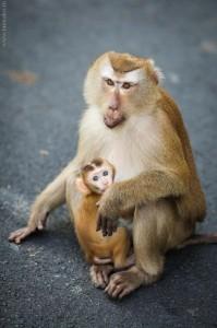Monkey-Hill-10